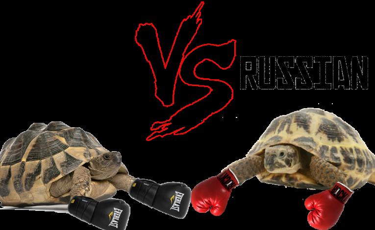 Hermann VS Russian Tortoise