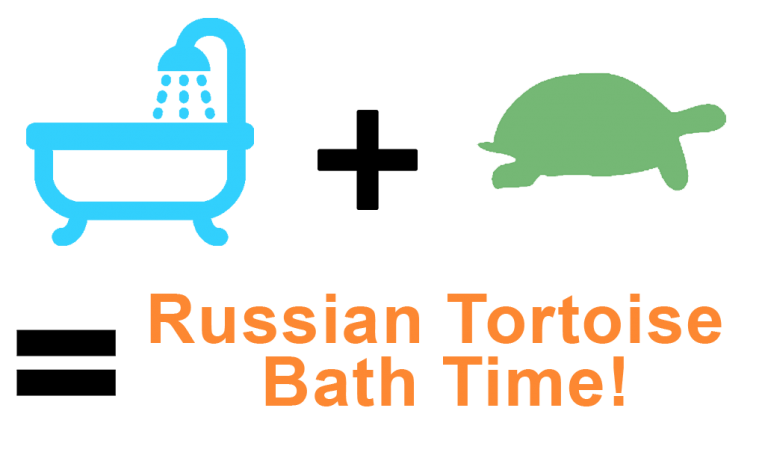 How to Bathe a Russian Tortoise