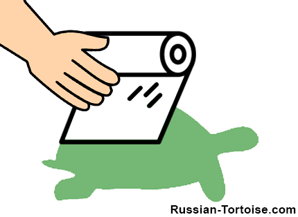 dry off your Russian tortoise with paper towels