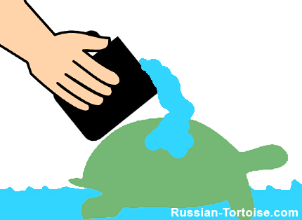pour water on your Russian tortoises back