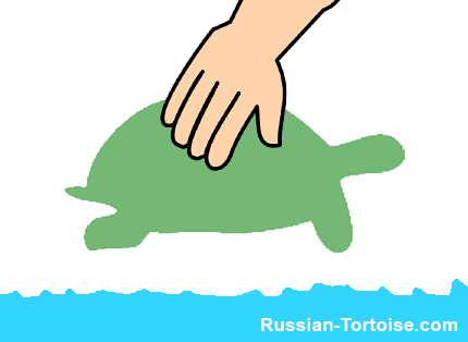 put your Russian tortoise in the water