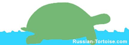 soak your Russian tortoise in the water