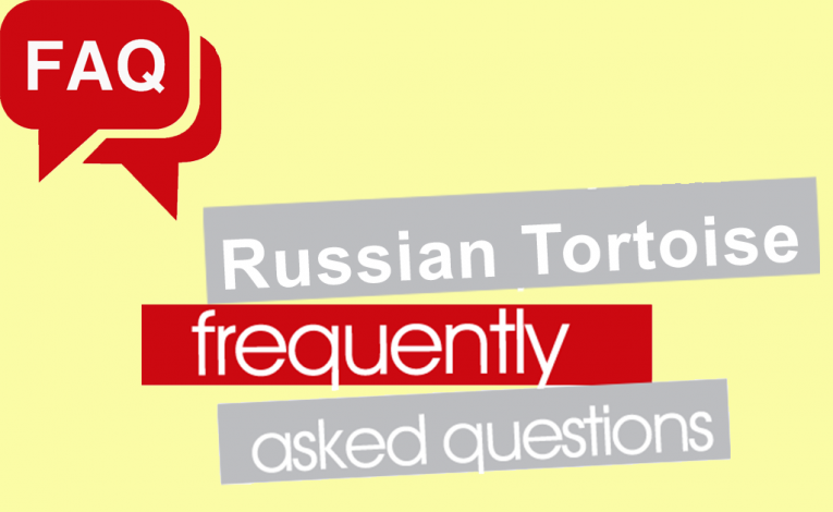 Russian Tortoise FAQ