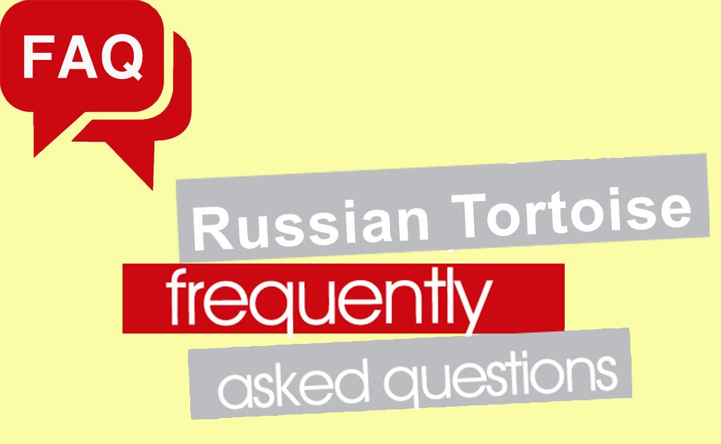 Russian Tortoise FAQ