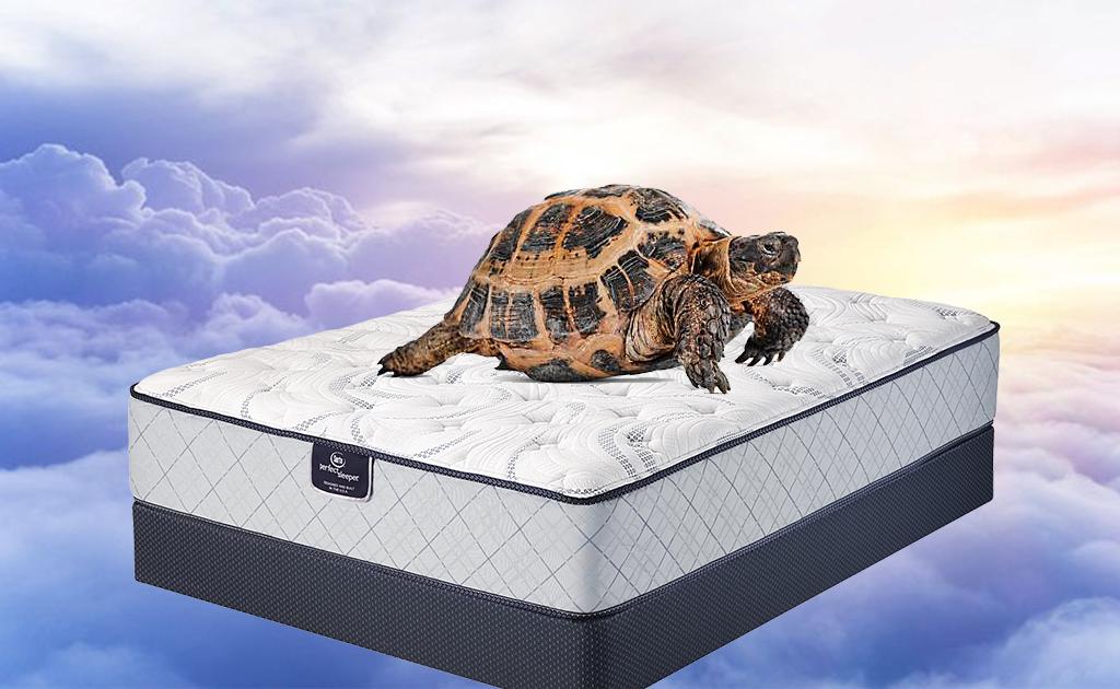 Tortoise mattress