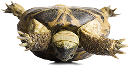 upside down tortoise