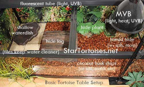 Russian Tortoise Temperature and Lighting