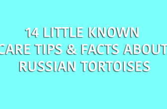 14 Little Known Care Tips & Facts About Russian Tortoises