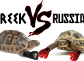 Greek VS Russian Tortoise