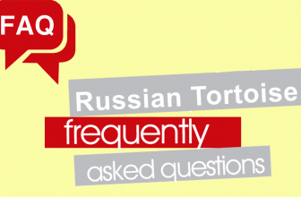 Russian Tortoise Frequently Asked Questions (FAQ)