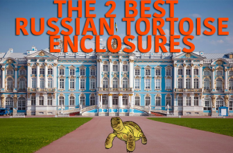 The top 2 Best Russian Tortoise Enclosures