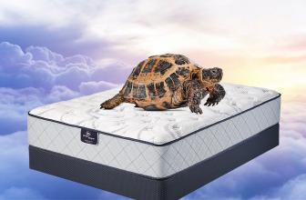 Pampering My Tortoise With A Mattress? Well, Kind Of…